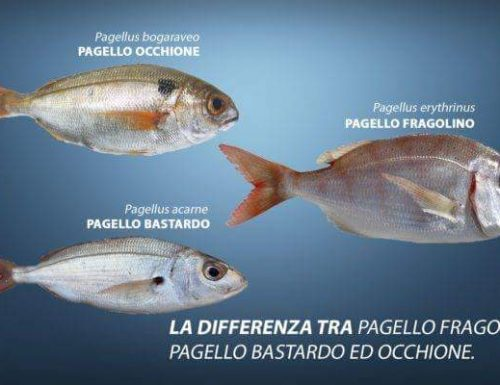 Pesci Pagello fragolino, bastardo ed occhione differenze!